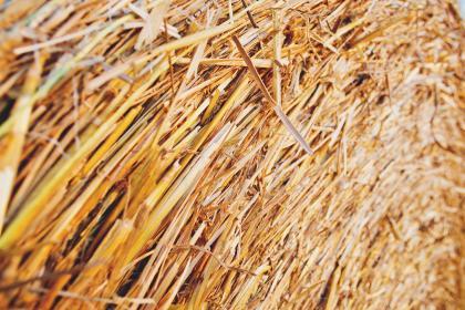 Find nålen i høstakken
